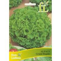 Alface Grand Rapids - 10 gr