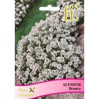 Alyssum - Branco