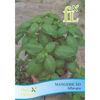 Aromáticas - Mangericão Alfavaca