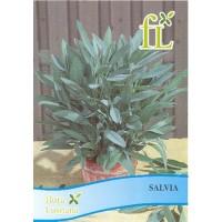 Aromáticas - Salvia